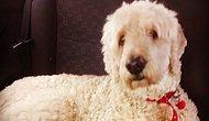Evden Çıktıktan Sonra, Köpeğin Hareketlerini Kamera ile Takip Eden Adamın Karşılaştığı Yürek Burkan Gerçek