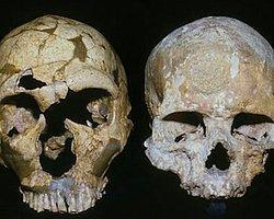 'Neandertalleri Yanardağ Yok Etmedi'
