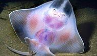 İçi Dışı Bir Diyebileceğiniz 22 Transparan Hayvan Türü