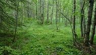 Hemen Şu An Finlandiya'ya Yerleşmeniz İçin 42 Sebep