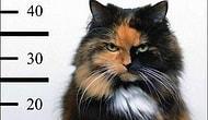 YSK'dan Seçim Günü İçin 'Kedi' Önlemi