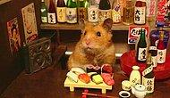 Servis Elemanı Olarak Çalışmaktan Büyük Mutluluk Duyan Birbirinden Tatlı 15 Hamster