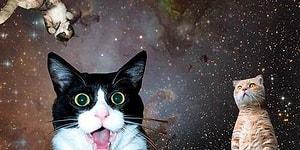 Evrenin Sonsuzluğuna Doğru Mutlu Bir Yolculuğa Çıkan 41 Uzay Kedisi