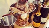 18 Fotoğrafla Instagram'ın Zengin Köpekleri