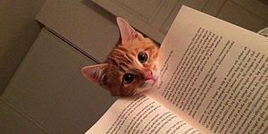 Sahiplerinin Kitap Okumasına Tamamiyle Karşı Olan 19 Evcil Hayvan