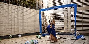Çoğu İnsandan Daha İyi Kalecilik Yapan Sevimli Köpek