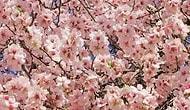 Baharın Yavaş Yavaş Geldiğinin 15 Kanıtı