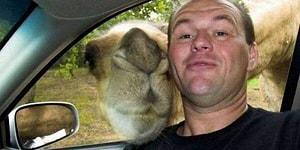 İnsanlarla Birlikte Selfie Çektirmenin Hastası Olan 19 Fotojenik Hayvan