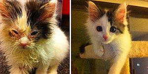 Kurtarıldıktan Sonra Bir Kedinin Nasıl Değişebileceğini Gösteren 15 Öncesi ve Sonrası Fotoğraf
