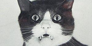 Dünyanın Bilinen İlk Kedi Videosu