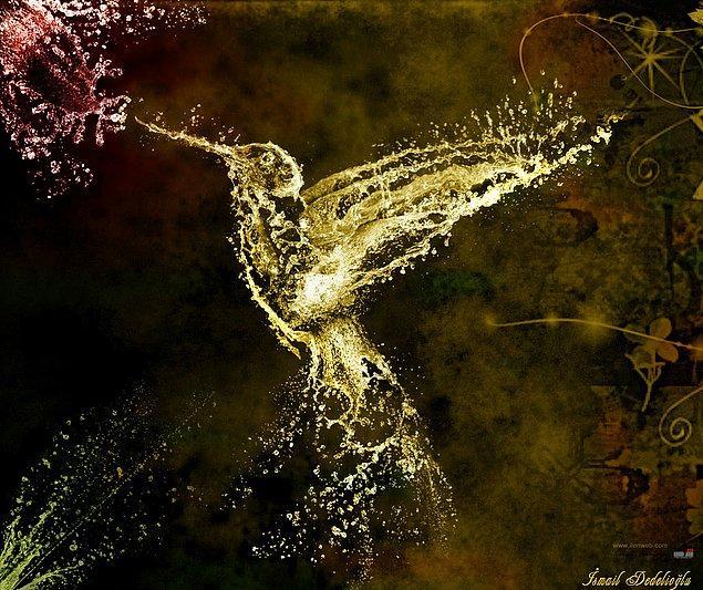 1. Sinek Kuşu