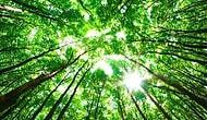 Drone Kullanılarak 1 Milyar Ağaç Dikilecek!