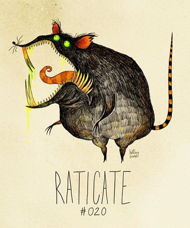 20. Raticate
