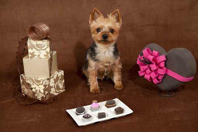 2. Çikolata merakı yoktur. O yüzden hepsi size kalır...