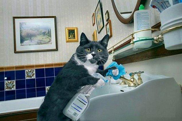 Amma pisletmişim. Temizle temizle bitmiyor.. Kim dedi bana lavabo da uyu diye !!