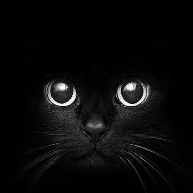 Siyah kediler geceleri neredeyse gözükmedikleri için çok iyi fare avcılarıdır
