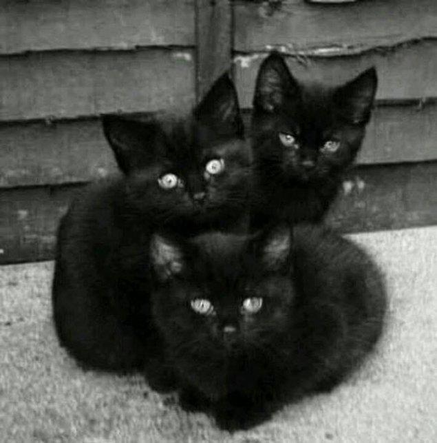 Ingiltere ve Japonya'da siyah kedilerin her zaman iyi şans getirdiğine inanıldı