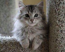 Kedi Sevdalısı 36 Ünlü Erkek