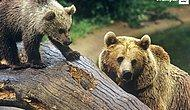 Av Turizminin Hedefindeki 6 Hayvan Türü