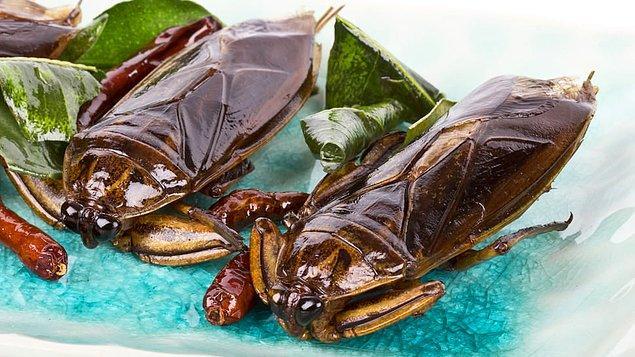 Su böceği - Tayland