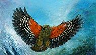 Dağların Soytarısı Kea Papağanı Hakkında Bilmeniz Gereken 11 Şey