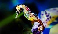 """Dünyanın En İlginç Hayvanlarından """"Denizatı"""" Hakkında Bilmeniz Gereken 14 Şey"""