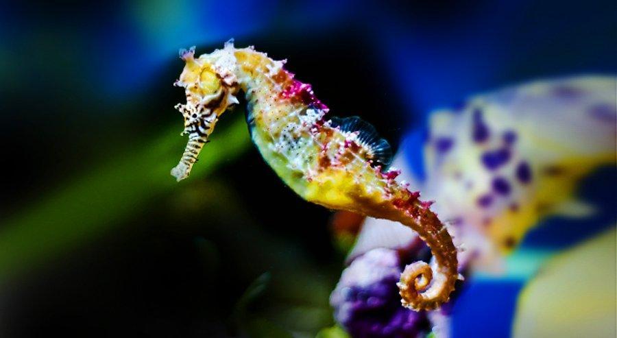 """Dünyanın En İlginç Hayvanlarından """"Denizatı"""" Hakkında Bilmeniz Gereken 14  Şey - onedio.com"""