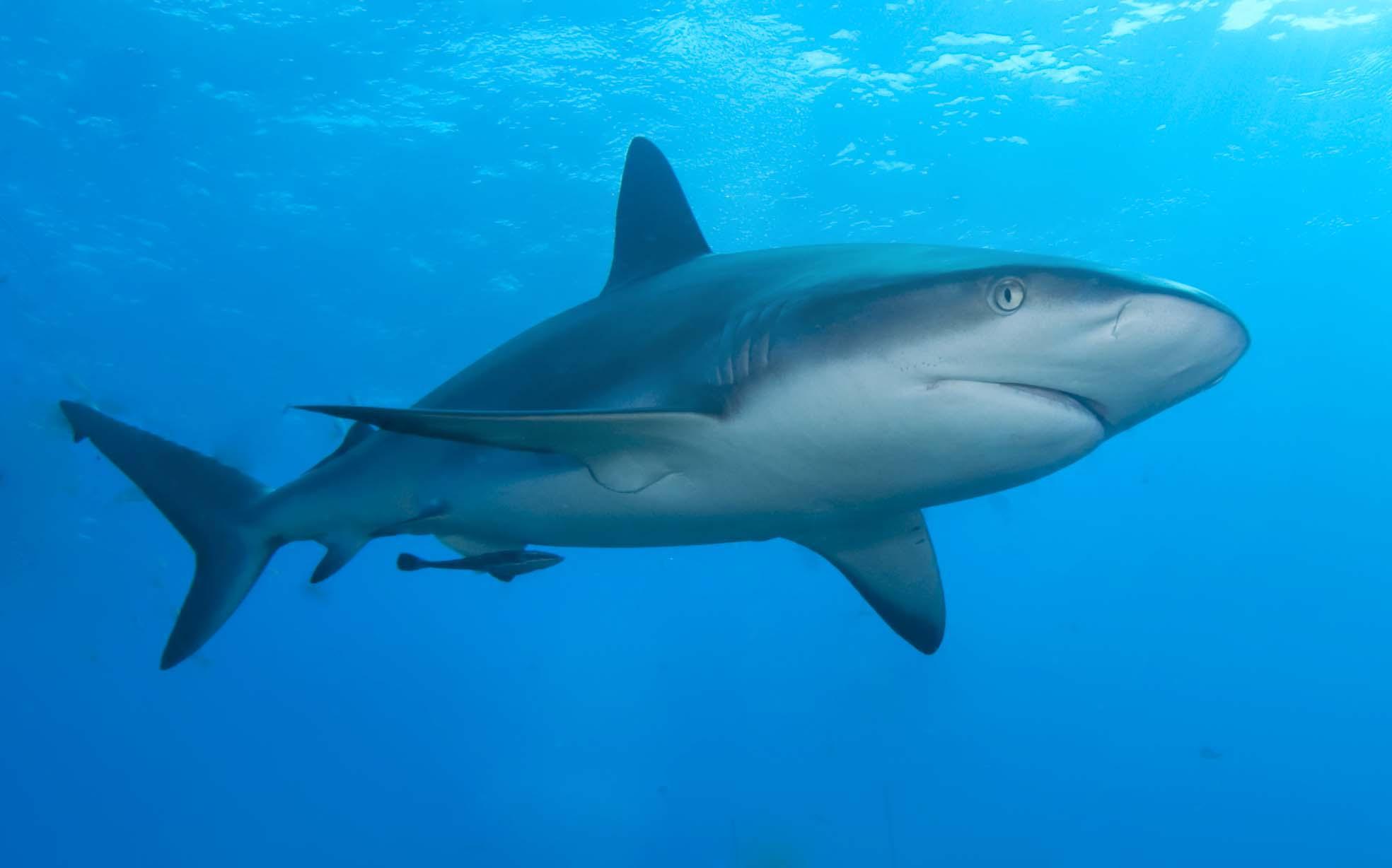 Shark Helmets  Fabricant de Casques  Shark