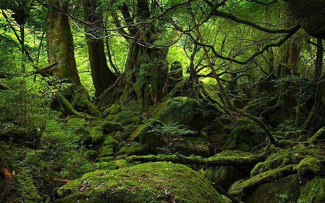 8. Büyülü Tanrı-Ağaç, Akgezenler, Düşmanlardan Kaçan Sakat Kardeşler: Viking Mitolojisi