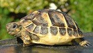 Kaplumbağayı Kurtarmak İsterken Canından Oldu...