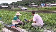 Japonya'da Üretilen Küp Karpuzlar