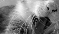 Sevmeyenlere Anlam Vermekte Zorlanacağınız Minnoş mu Minnoş 14 Kedi