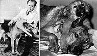 7 Maddede Hayvanlar Üzerinde Yapılmış Acımasız Deneylerin En Ünlüsü: Çift Başlı Köpek Deneyi