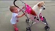 Bebekler ve Köpekler Yürüyüşe Çıkarsa Ne Olur ?