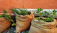 Evde Kendi İmkanlarıyla Tarım Yapmak İsteyenlere Yemyeşil 7 Tavsiye