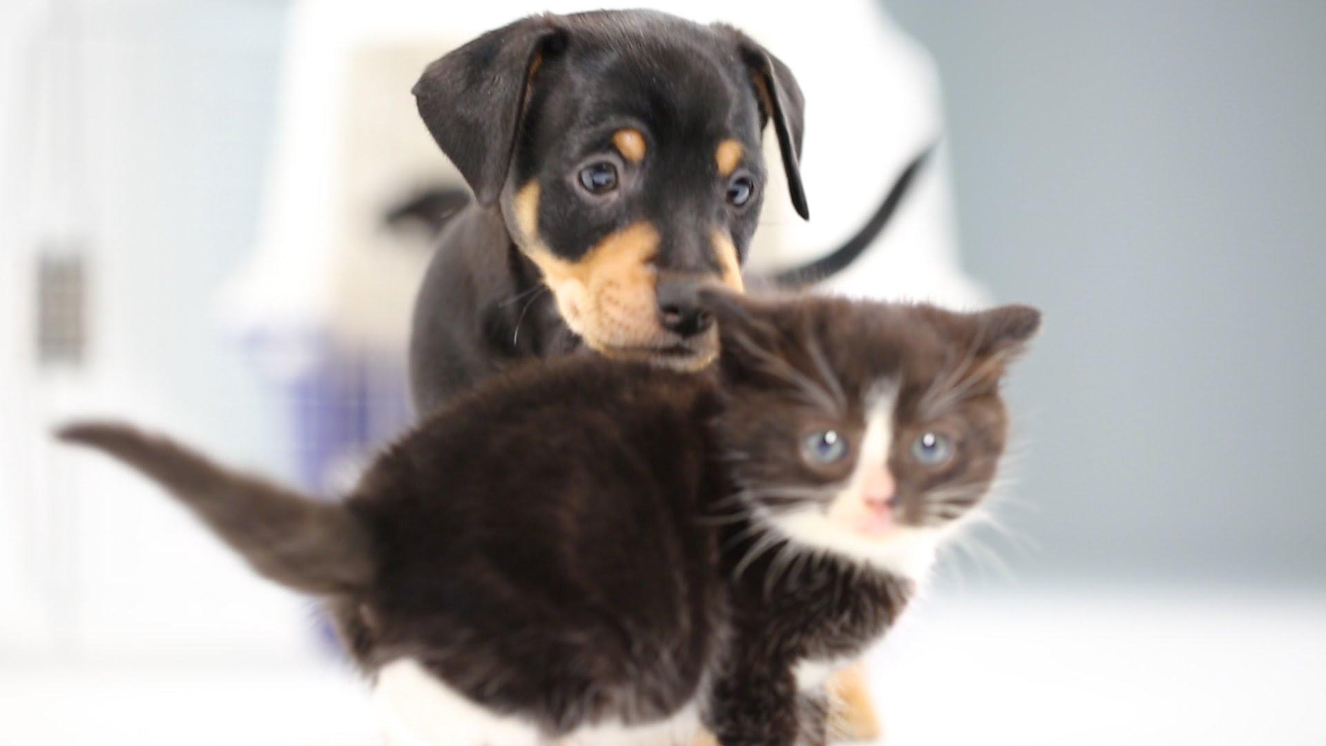 Собачка с играющимся котом бесплатно