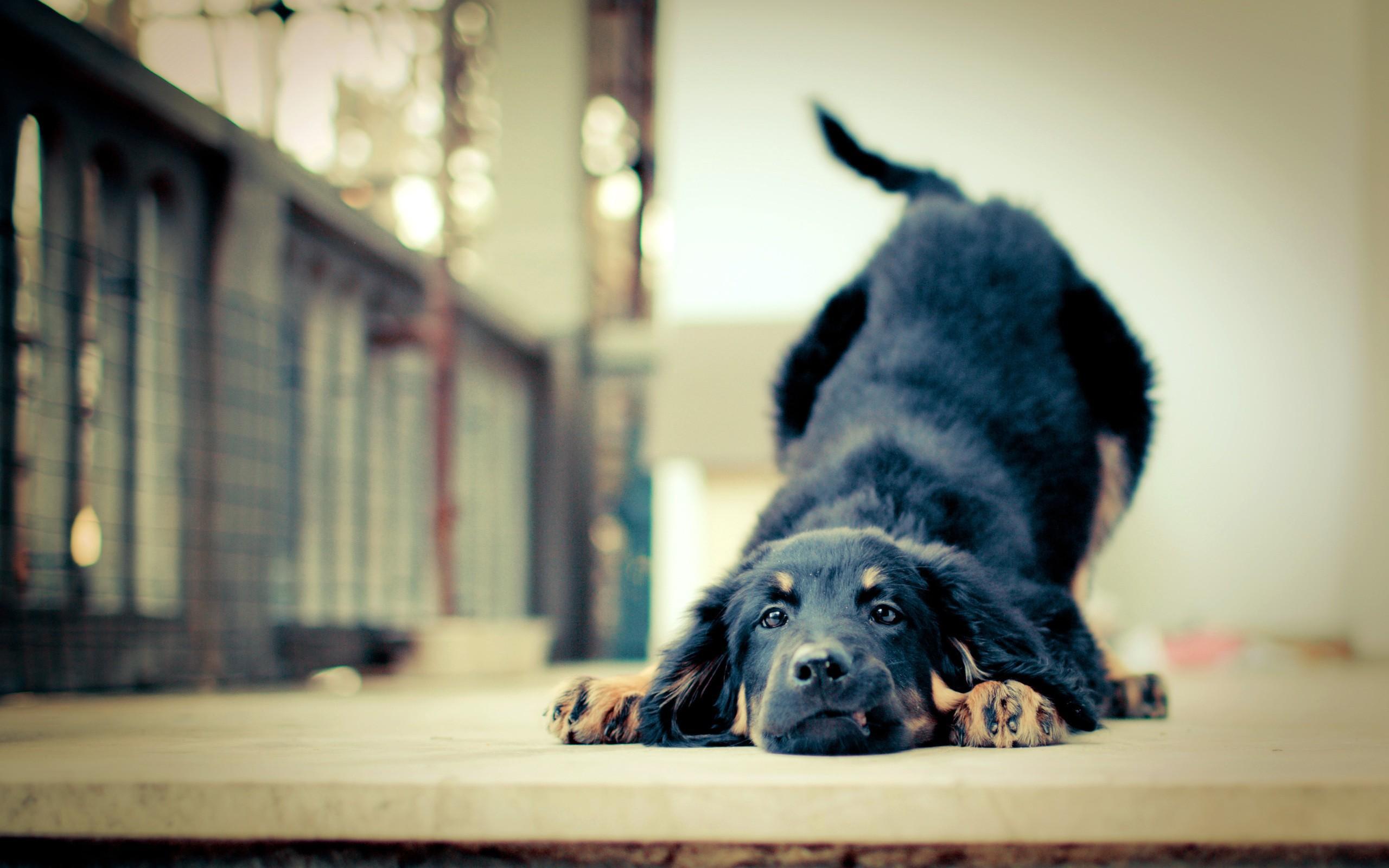 Стена животное собака загрузить