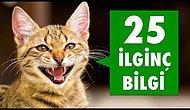 Kediler İle İlgili 25 İlginç Bilgi