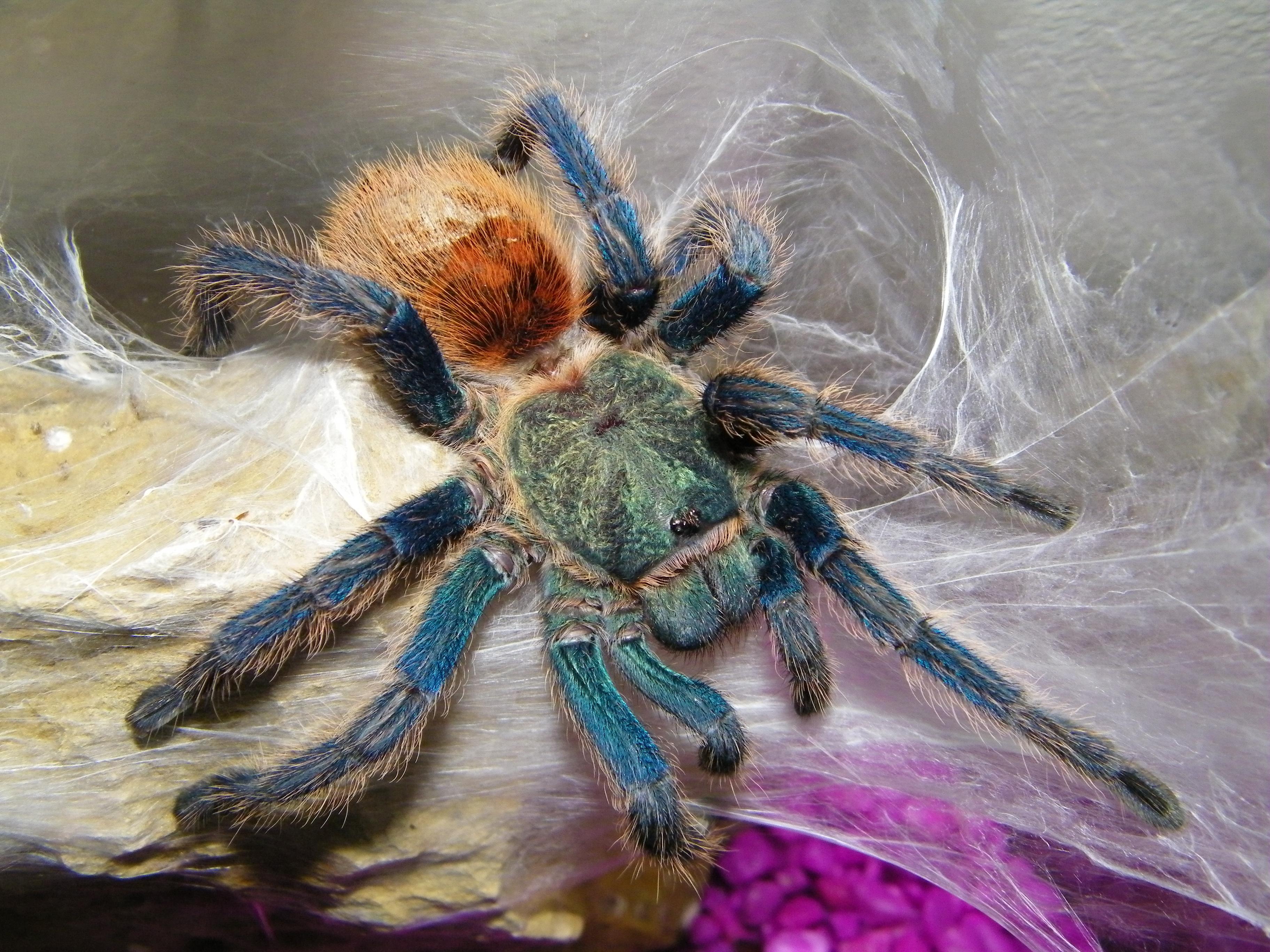 смотреть фото тарантула плечу только комедийные