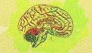 Beynini Tam Kapasite Kullanmak İsteyenlere: Zihin Haritaları