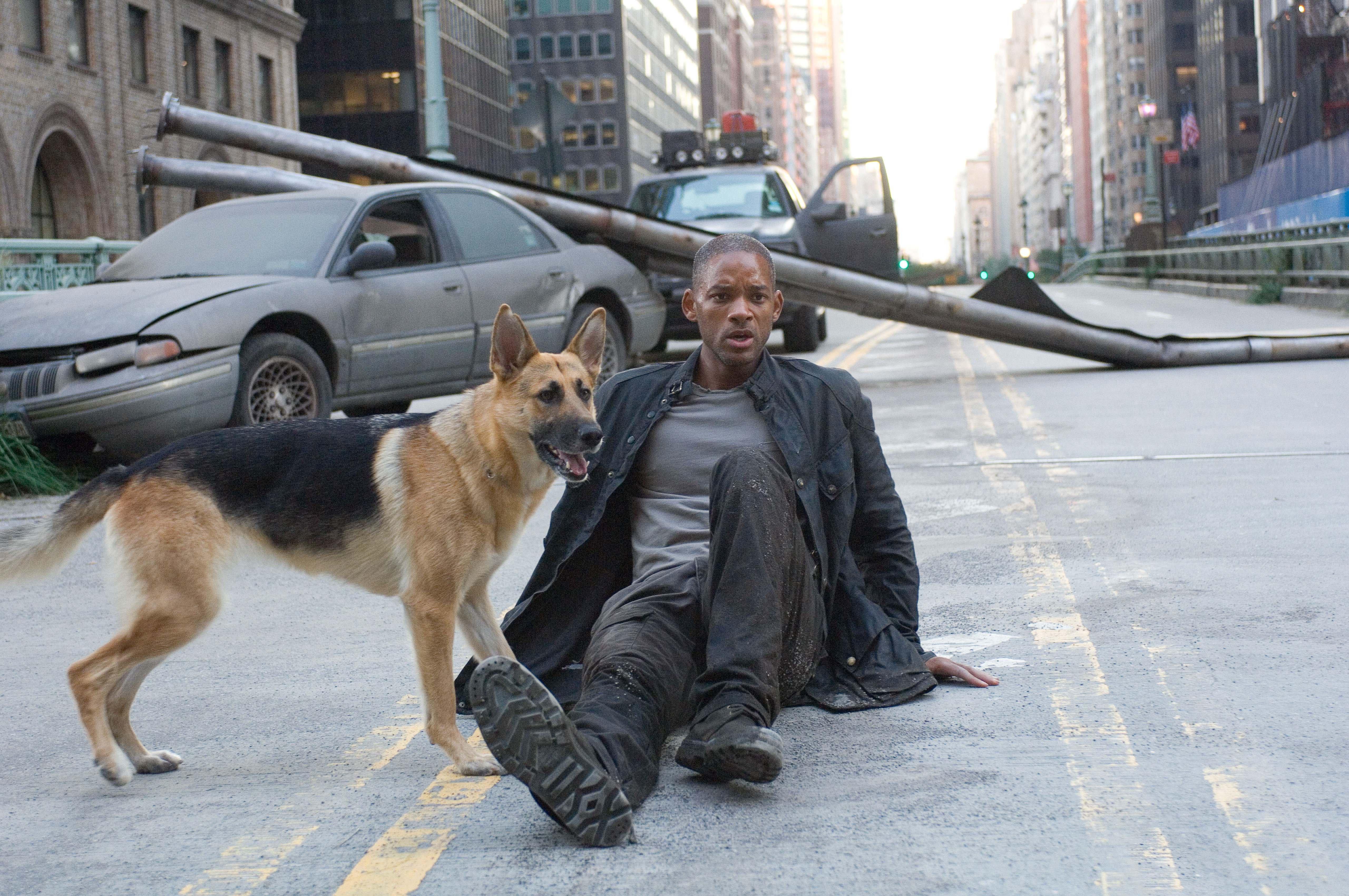 Köpekler hakkında en dokunaklı film