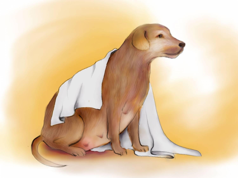 Efsane veya Gerçek: Bir insan bir köpeğe hamile olabilir mi