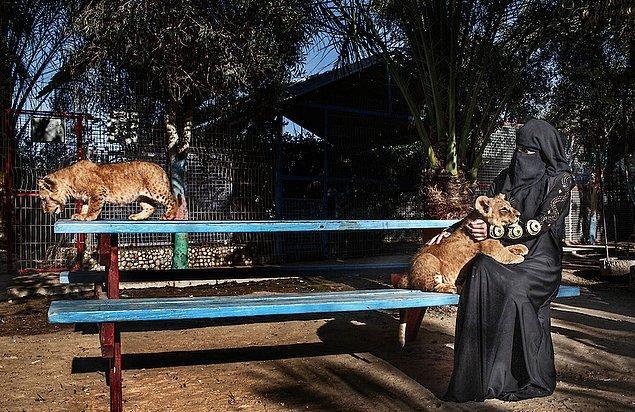 7. Gazze'de hayvanat bahçesinde yavru aslan seven kadın