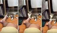 Sahibinin Ayağıyla Oynarken Kendinden Geçen Kedi