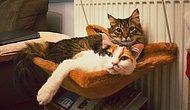 13 Fotoğrafla Sosyal Medyanın Geveze Kedileri Üzüm ve Ryuk