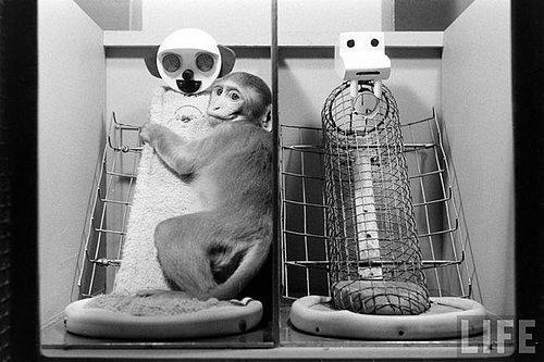 harry harlow maymun deneyi ile ilgili görsel sonucu