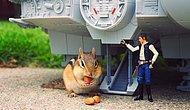Star Wars Dünyasının Misafiri Minik Sincabın 13 Şaşkın Fotoğrafı