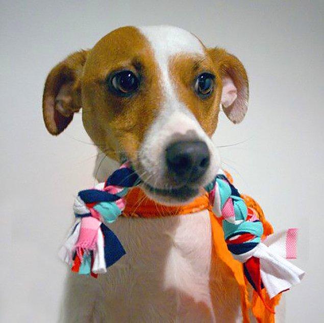 10. Minik dostunuzun bir oyuncağa ihtiyacı var ise, pet shop'tan almak yerine ona kendiniz bir oyuncak yapabilirsiniz.