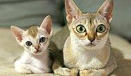 Kediler ve Adeta Birebir Minyatür Kopyaları Olan Yavruları Gününüzü İyileştirecek!