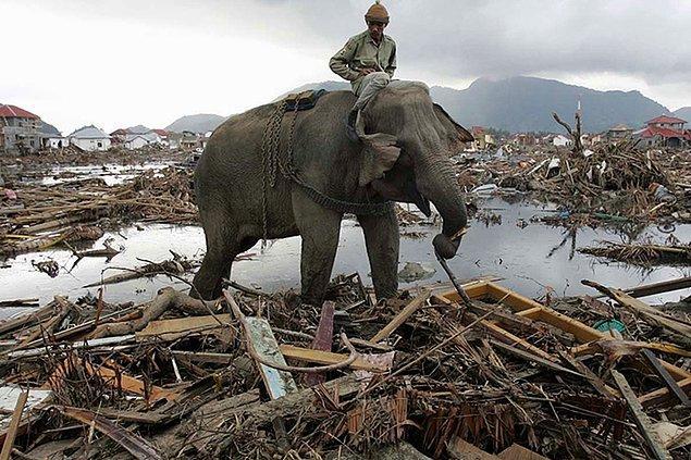 Tsunami sonrası olaylar